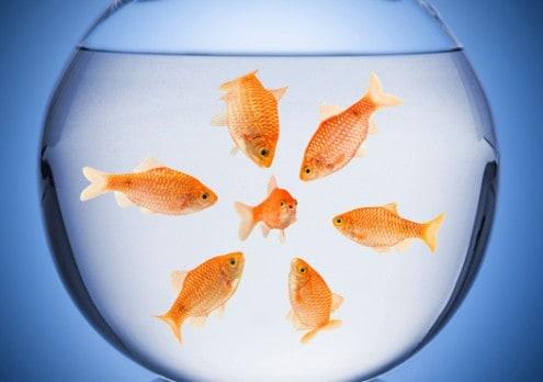 aumenta-tu-liderazgo